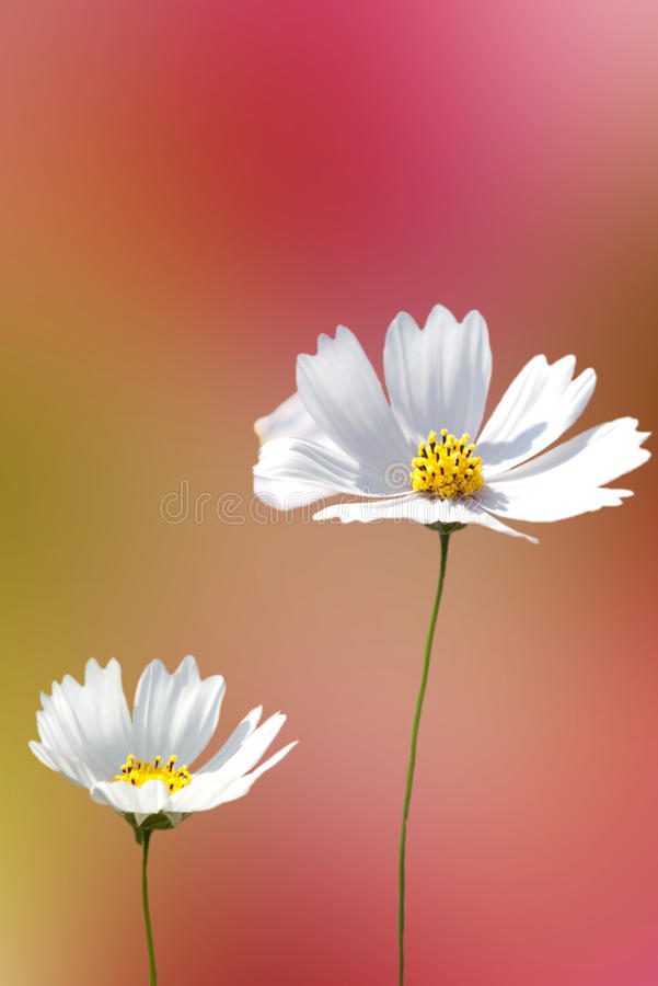 Beautiful Floral Border stock photo