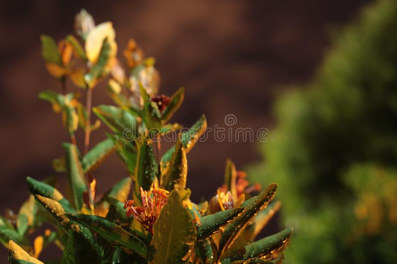 Shallow depth of focus in the garden. stock image