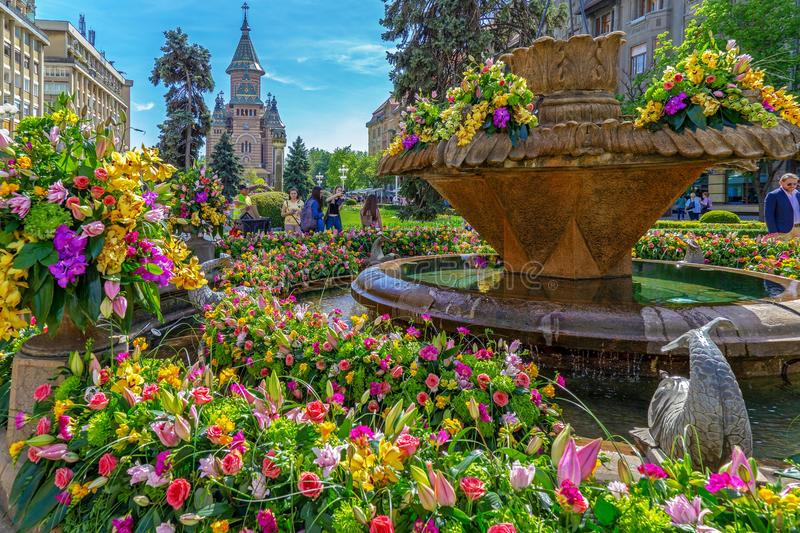 Beautiful floral decoration in Timisoara, Romania. TIMISOARA,ROMANIA-APRIL 27,2018:Floral decorations in Victory Square on the occasion of the Flower Festival stock photography