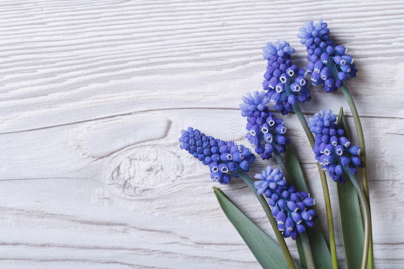 Beautiful floral frame with blue flowers muscari royalty free stock photography