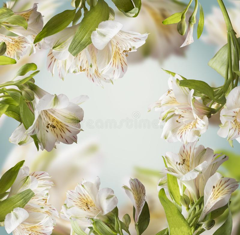 Beautiful floral green white color layout frame with flying flowers at turquoise royalty free stock image