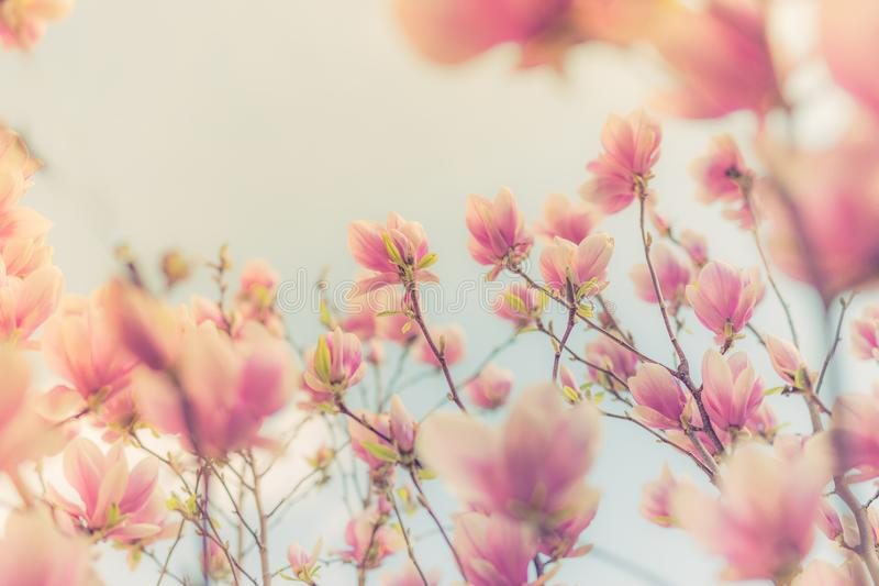 Gorgeous spring summer blooming flowers, inspirational nature background royalty free stock images