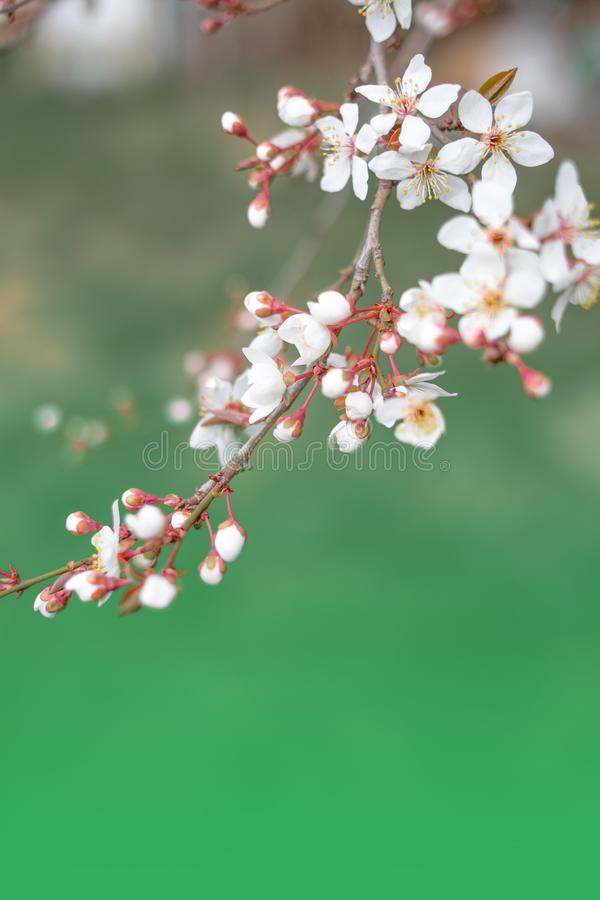 Beautiful floral spring abstract background of nature royalty free stock photo