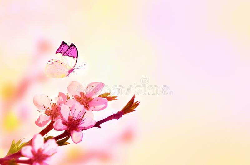 Beautiful floral spring abstract background of nature and butterfly. Branch of blossoming peach on light pink sky background. For royalty free stock images