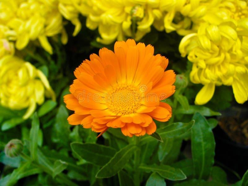 Beautiful flower stock image