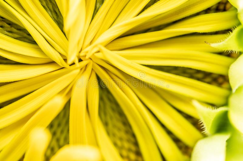 Beautiful flower for background, Floral background. stock photo