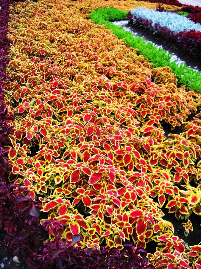 Beautiful flower-bed royalty free stock images