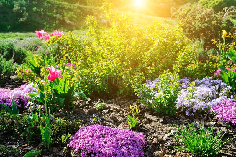 Beautiful flower bed with the first spring flowers. stock image