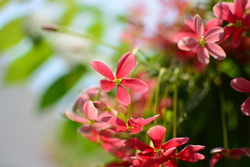 A beautiful flower royalty free stock photos