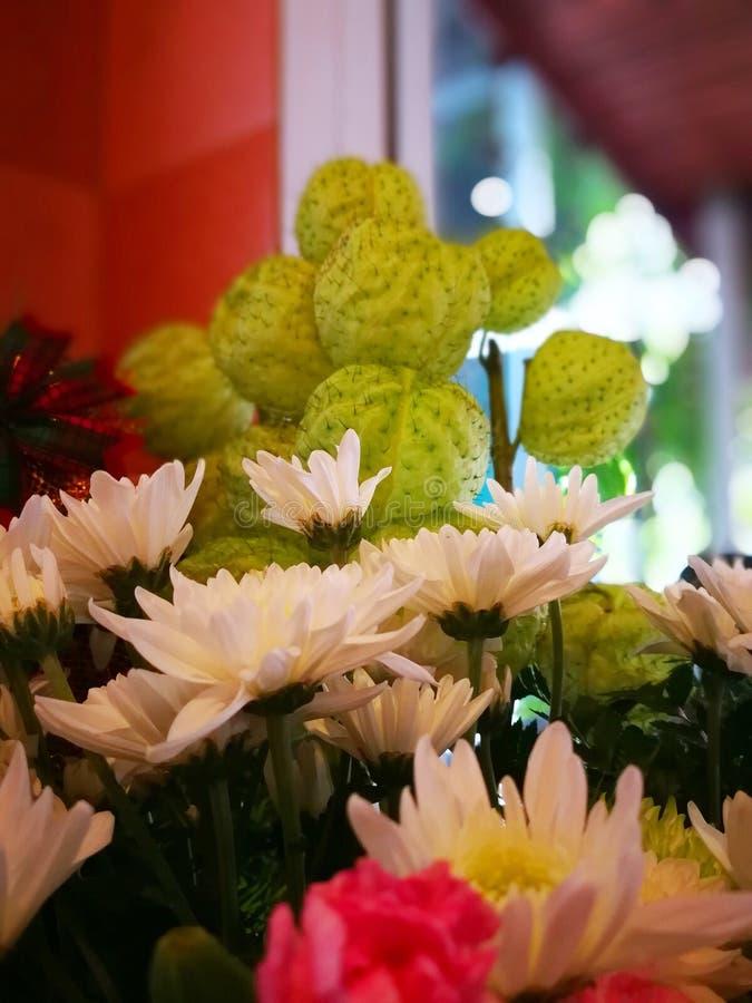 White chrysanthemums and milkweeds royalty free stock photography