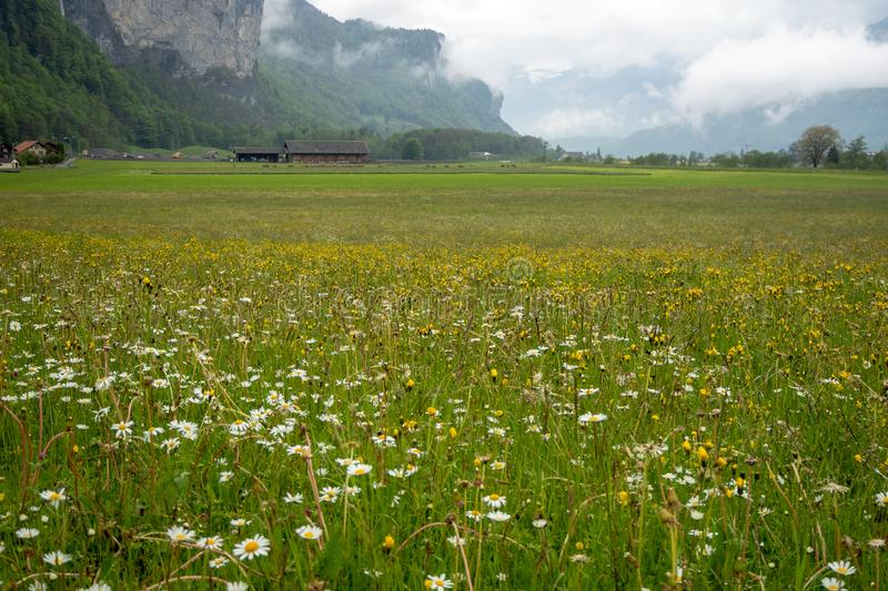 Beautiful flower field and ranch in rural area of switzerland on mountain full of fresh green trees and cloud sky background. With copy space stock images