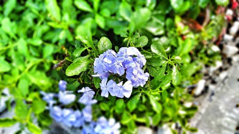 Beautiful Flower royalty free stock photo