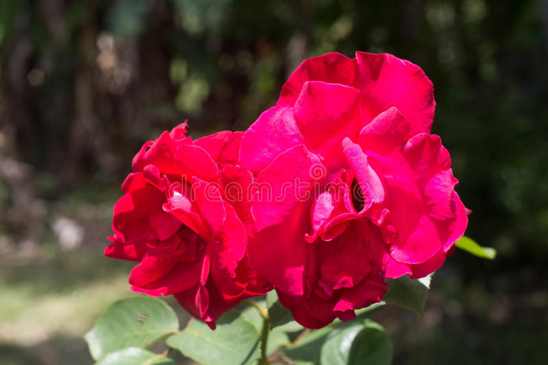 Beautiful flower in the forest royalty free stock photos