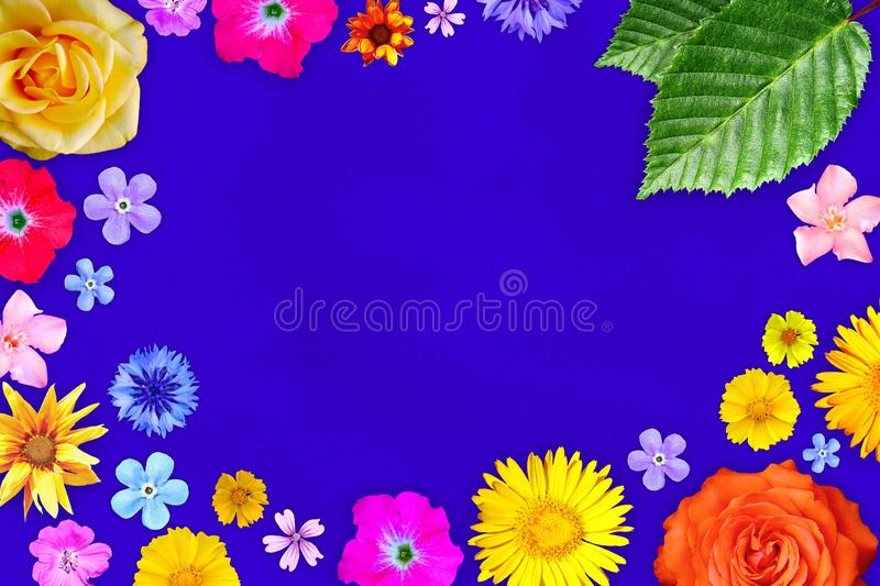 Beautiful flower frame with empty in center on purple paper background. Floral composition of spring or summer flowers. royalty free stock image