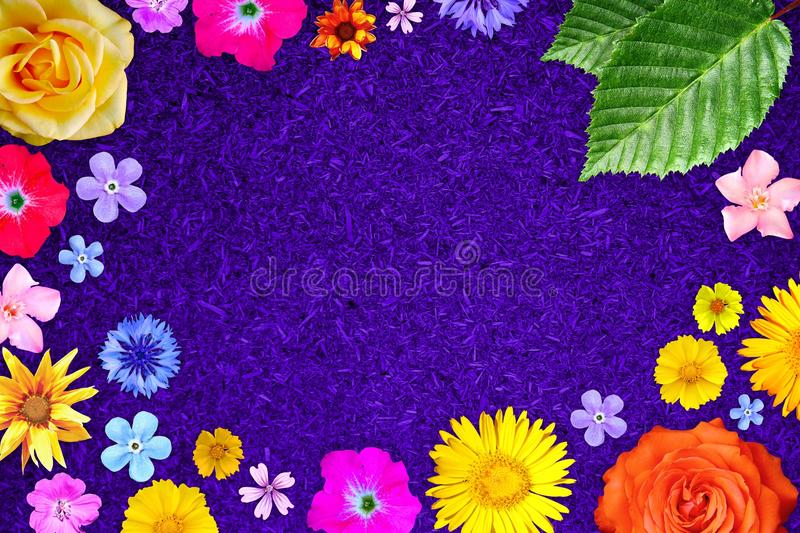Beautiful flower frame with empty in center on purple particle board background. Floral composition of spring or summer flowers. royalty free stock images