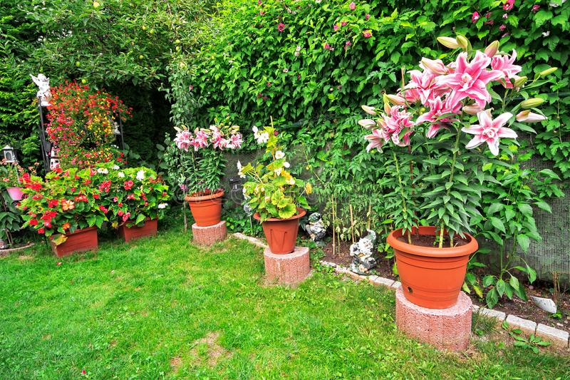 Beautiful flower garden and flower pot decorations on summer stock photography