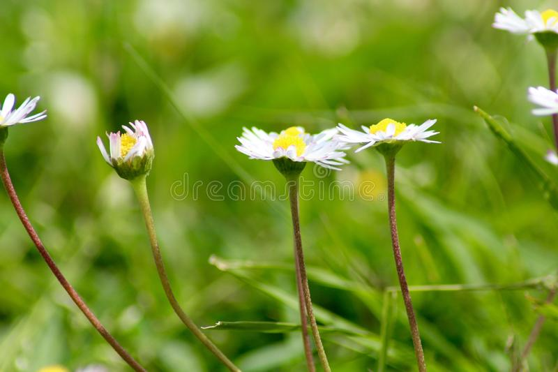 The beautiful flower in the garden. royalty free stock photography