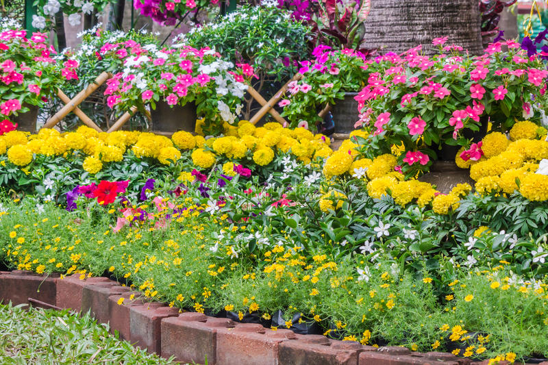 Beautiful flower garden on summer. Picket fence surrounded by flowers in a front yard on summer stock image