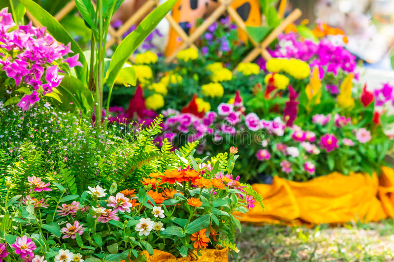 Beautiful flower garden on summer. Picket fence surrounded by flowers in a front yard on summer stock images