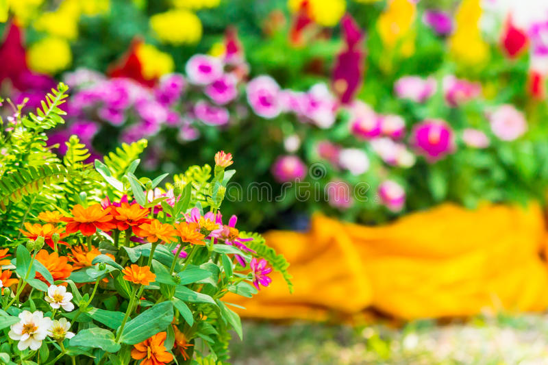Beautiful flower garden on summer. Picket fence surrounded by flowers in a front yard on summer royalty free stock image