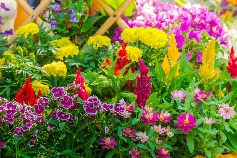 Beautiful flower garden on summer. Picket fence surrounded by flowers in a front yard on summer stock photos