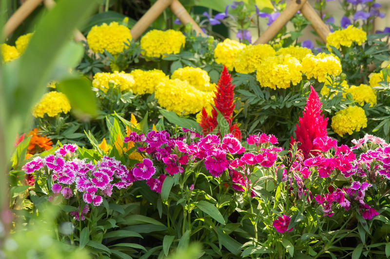 Beautiful flower garden on summer. Picket fence surrounded by flowers in a front yard on summer stock photo
