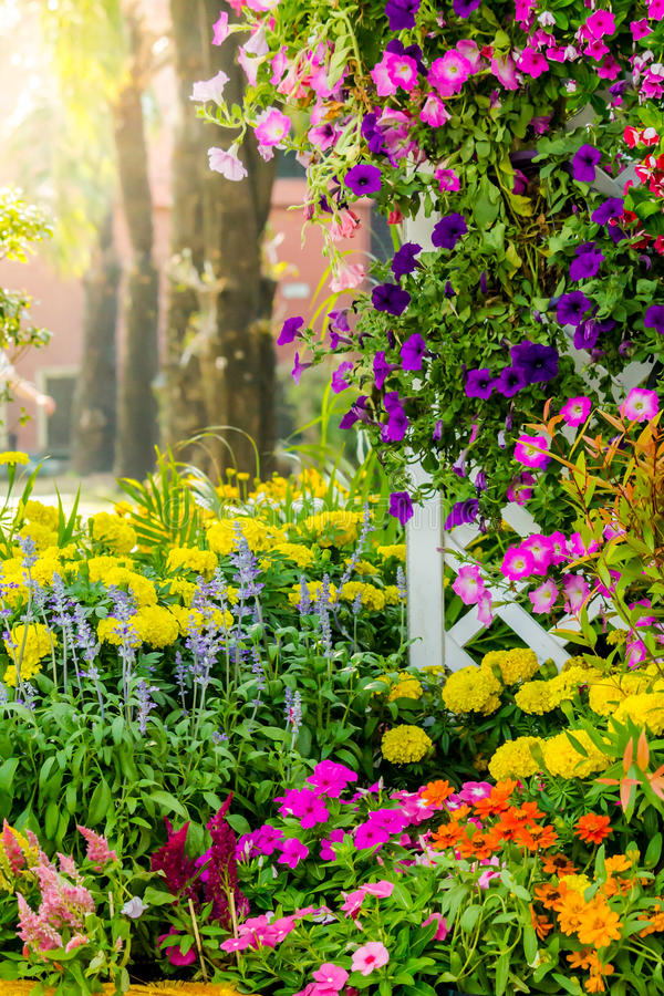 Beautiful flower garden on summer. Picket fence surrounded by flowers in a front yard on summer royalty free stock images