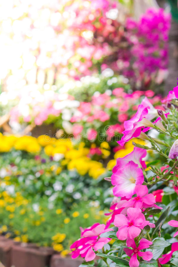 Beautiful flower garden on summer. Picket fence surrounded by flowers in a front yard with sun flare on summer stock photography