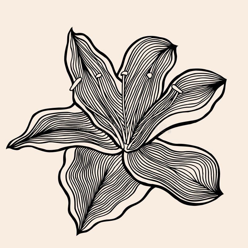 Beautiful flower, Hand drawn. Vector illustration, black on beige stock illustration