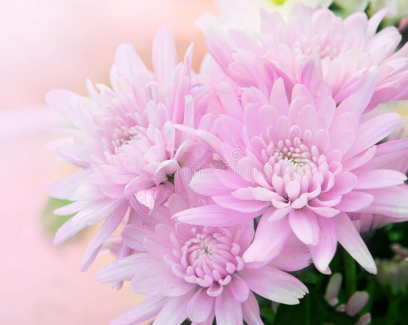 Download Beautiful Flower With High Key Technic Photography Stock Photo - Image: 27547466