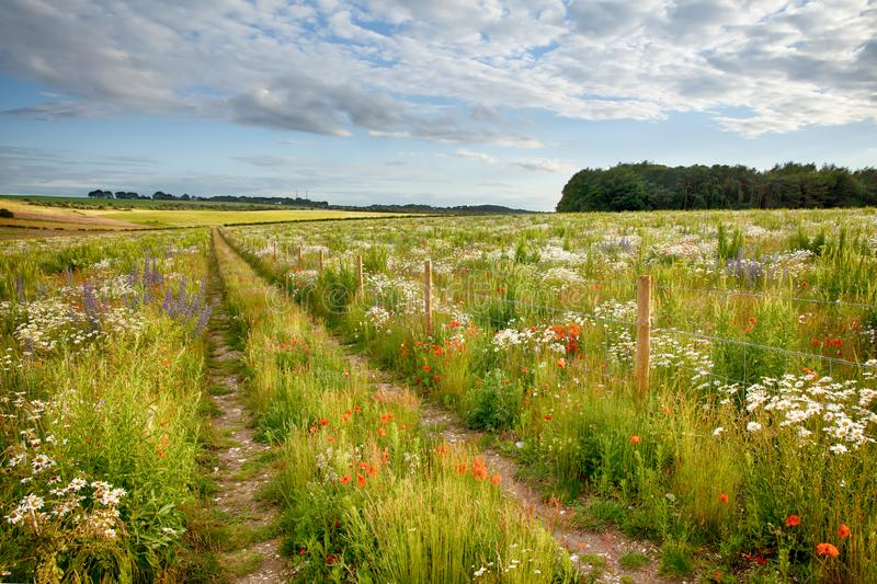 Beautiful flower meadow and track royalty free stock image