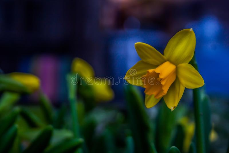 A beautiful flower royalty free stock photography