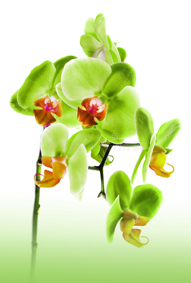 Beautiful flower Orchid stock photos
