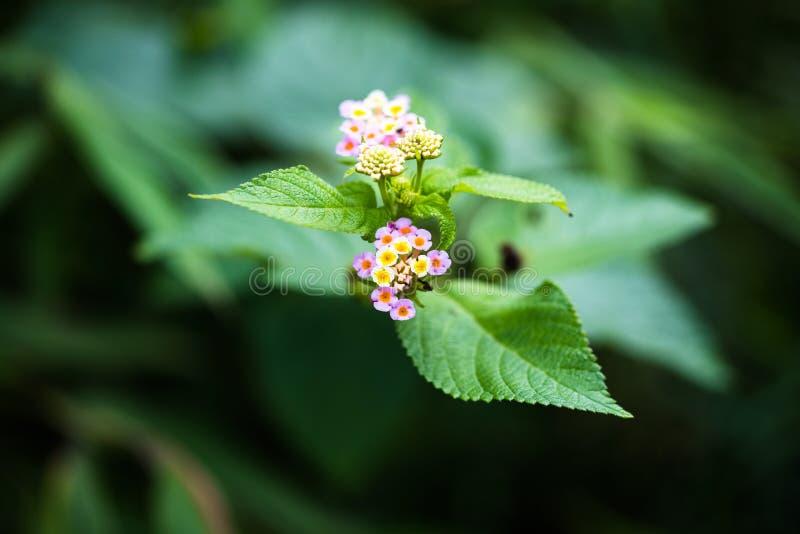 A beautiful flower stock photo