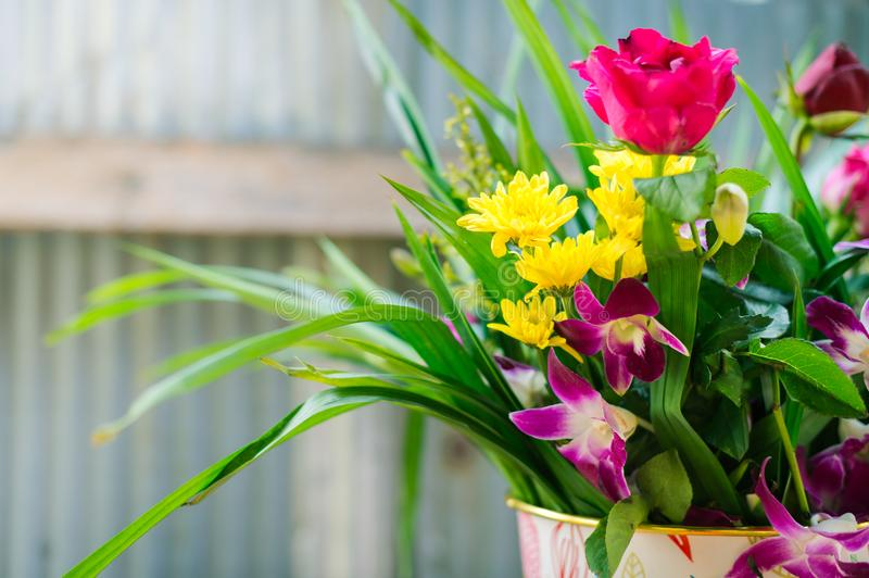 Beautiful flower in pot royalty free stock photo