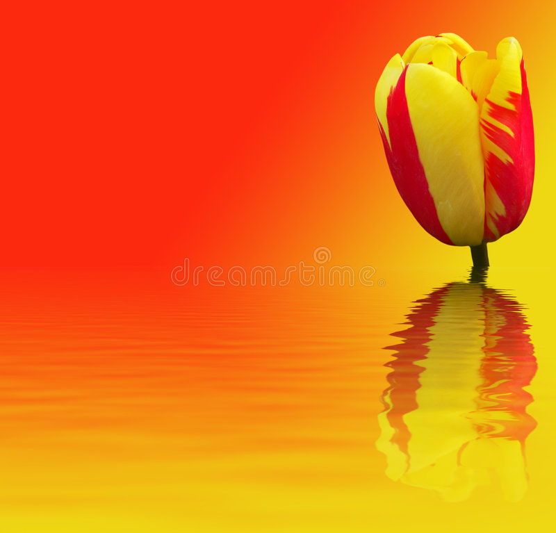 Beautiful flower on red - yellow background stock photography
