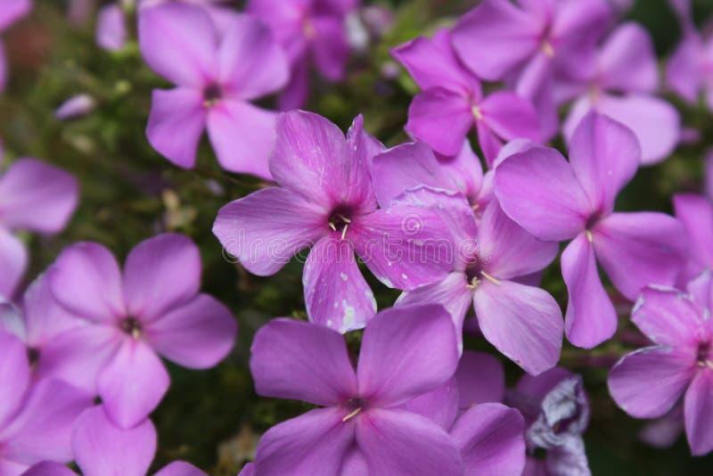 Beautiful flower we see everyday stock photo