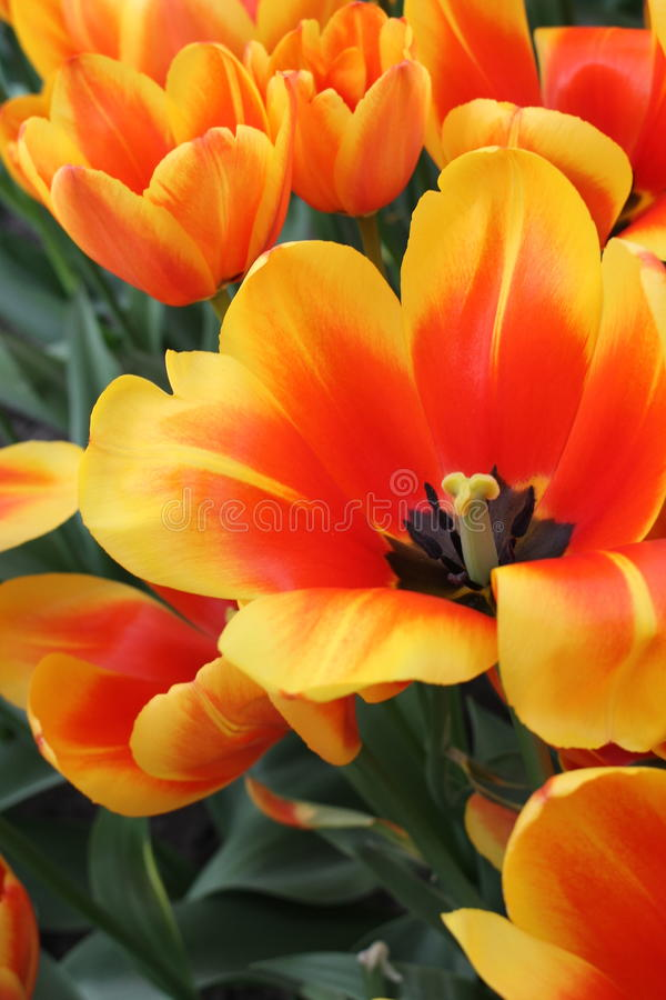 Beautiful flower in spring royalty free stock photography