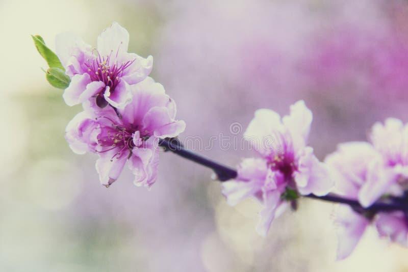 Download Beautiful flower stock image. Image of beauty, gardening - 39511049