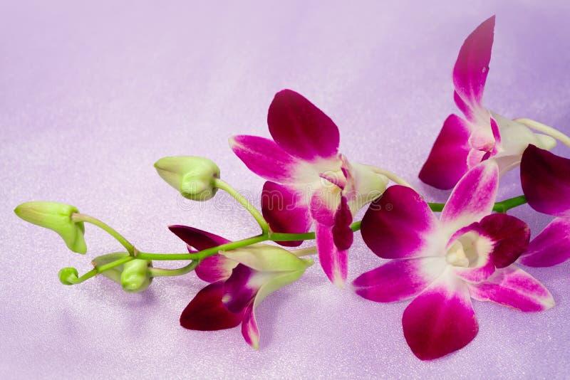 Beautiful flower Thai Orchid stock photo