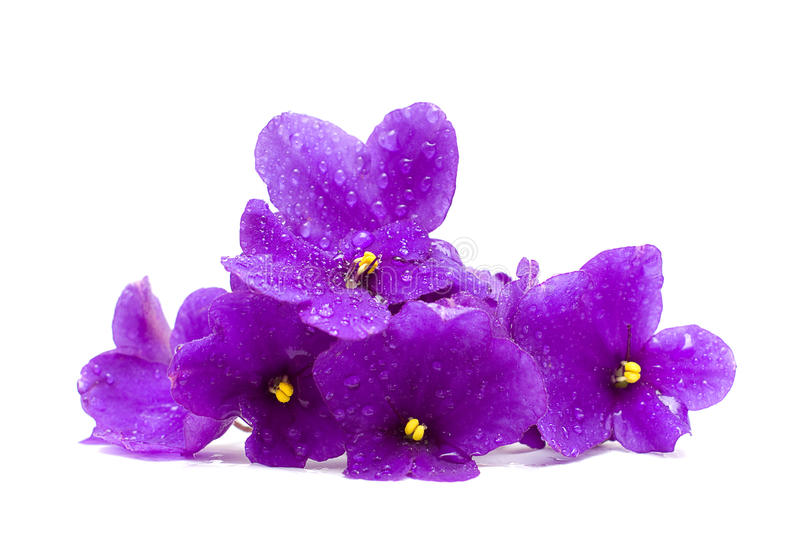 Beautiful Flower with Water Drops royalty free stock images