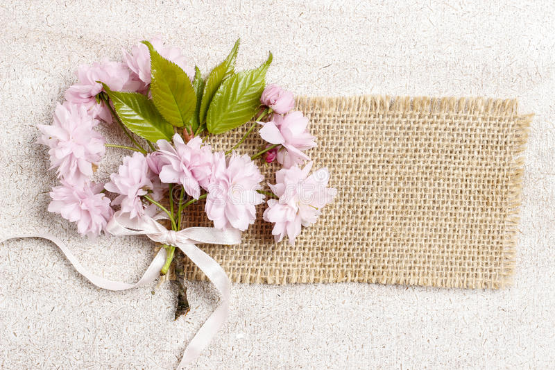 Download Beautiful Flowering Almond (prunus Triloba) On Wooden Background Stock Image - Image: 43503087