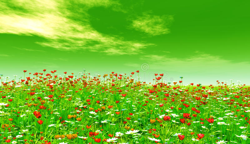Beautiful flowers vector illustration