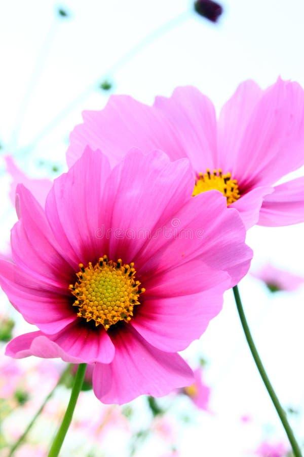 Free Beautiful Flowers Royalty Free Stock Photos - 14987468