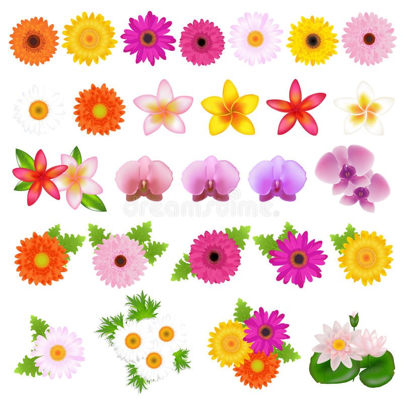 Beautiful Flowers royalty free illustration