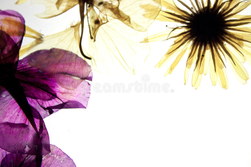 Download Beautiful flowers stock photo. Image of growth, abstract - 22864970