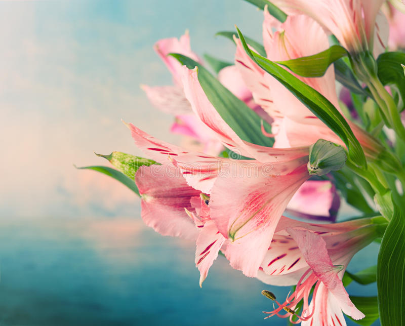 Beautiful flowers background royalty free stock photography