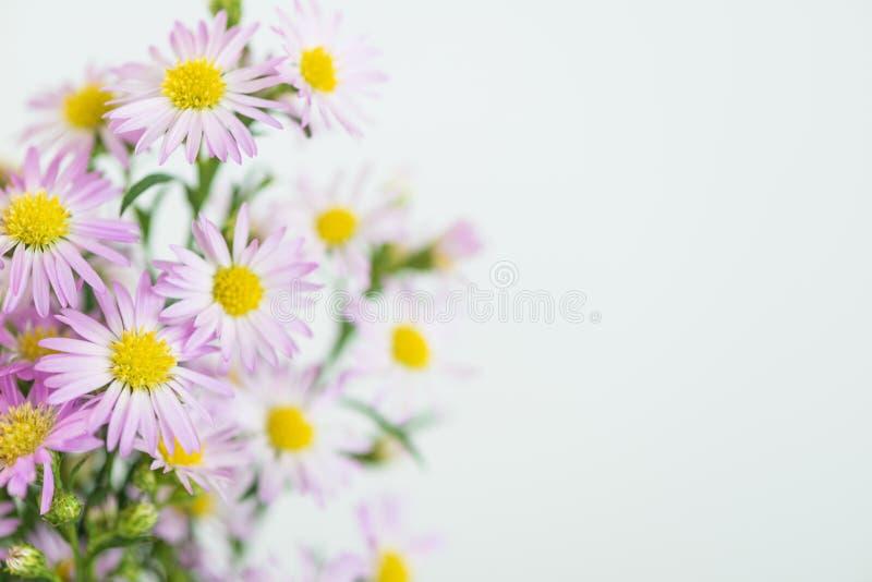 Beautiful flowers background stock photography