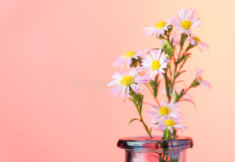 Beautiful flowers background royalty free stock images