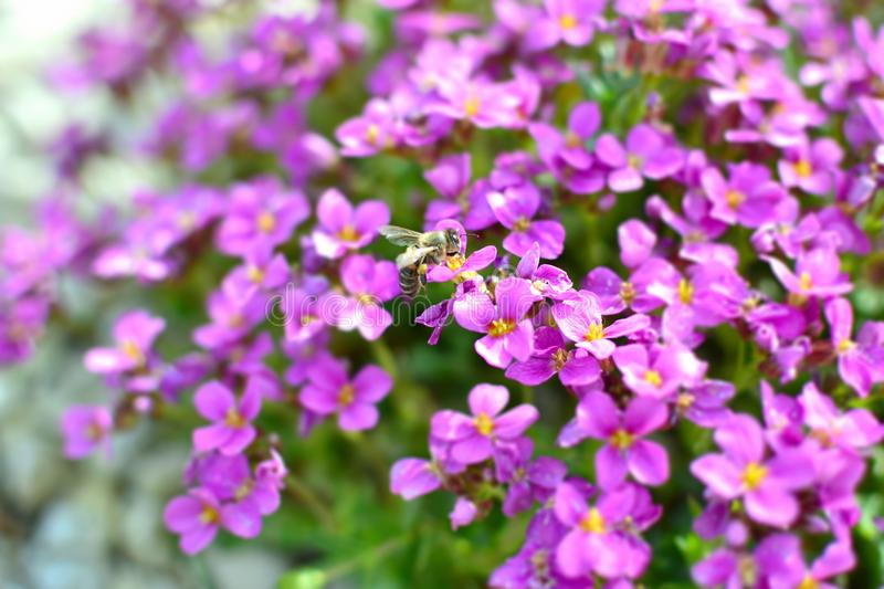 Beautiful, Flowers, Bee, Bloom royalty free stock photos